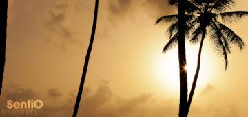 Coastal_DR_Punta_Cana_02