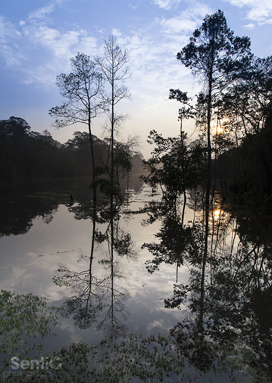 Nature_Cambodia_SiemReap_04